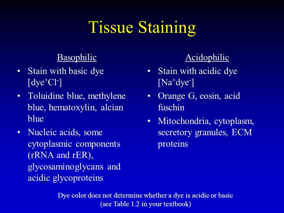 Tissue Staining Basophilic Stain with basic dye [dye+Cl-]